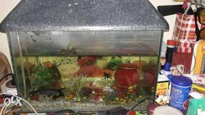 1 big and 1 small BETTA aquarium