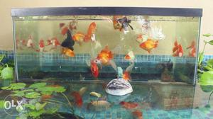 Fish tank Cleaning Service & Setting in Chennai & Out of