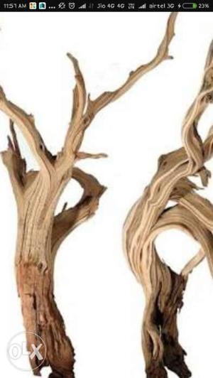 Need drift wood for aquarium if anyone have