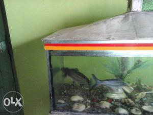 Shark fish 2 nos free. Want to give away these 2