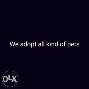 Black Background With We Adopt All Kind Of Pets Text Overlay