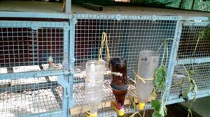 Gray Chicken Coop