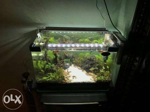 Nano planted aquarium done by BJ AQUARIUM cal for