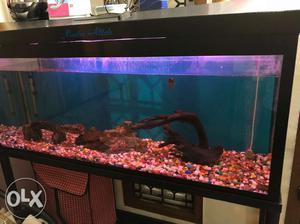 Complete aquarium set for just