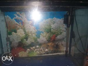 Moulded aquarium 22inch by 16 inch along with