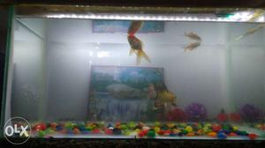 Fish tank (aquarium) with four fishes and food. Ye fixed