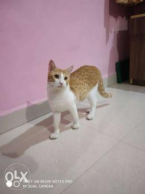 Male cat 10 months old. want to sale... in loving