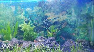 Garden work done by as.  fish tank cleaning