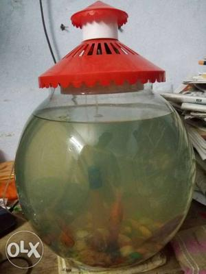 Fish bowl looking nice and contains all equipment