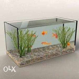 Person required who can make fish aquarium at my