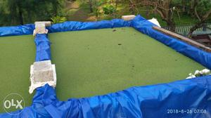 Azolla as a fresh cattle,fish and poultry feed