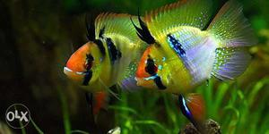 Exotic world of fishes, aquariums, accessories,pets, cats,
