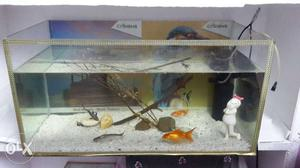 Fish pot with filter, 5 fish, ston, and big size