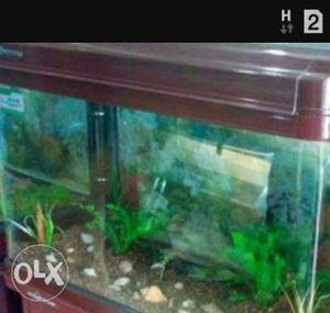 Medium size Aquarium only (maroon color)
