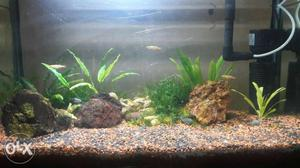 Aquarium 2/1.5 for planted tank with complete set