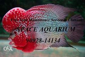 FISH TANK Maintenance Decoration & Cleaning Service