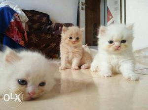 All types kittens available transport available