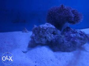 We make all type of Marine aquarium &any type