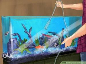All Kind Of Aquarium Survice and cleaning in Minimum cost