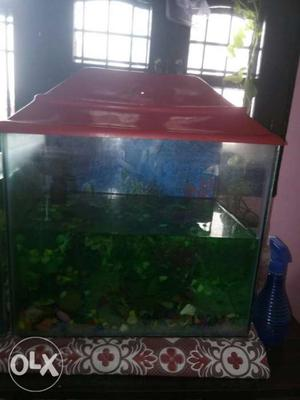 Fish tank, fillter, white small Stones and some