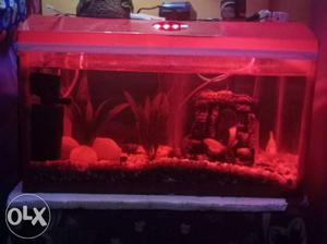 2 feet fish tank fully decorated with cover