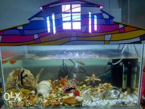 Fish tank  pair angel 1 pair shubhankin