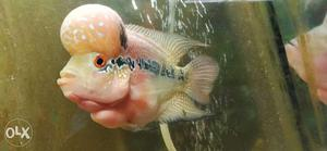 White And Black Fish In Fish Tank
