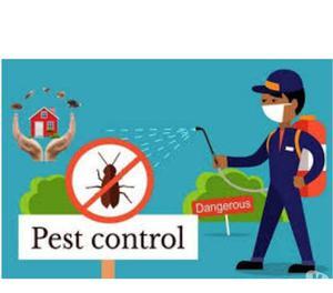 Pest Control in Kukatpally, Miyapur, Madhapur, Hitech City