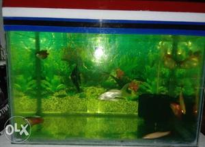 """1.5ft x 10"""" x 1ft Fish Tank with Cover & Light"""