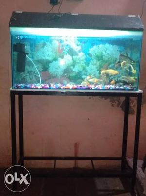 Imported orihinal sun sun fish tank size | Posot Class