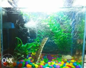 500 only aquarium. and if you will buy other