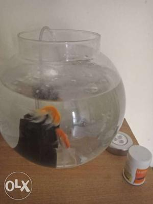 Kids Fish tank with 2 small Fish