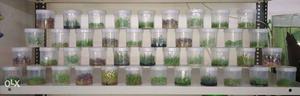 Tissue Culture Aquarium Plants available. Algae