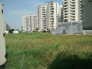 250 sq yds residential plots in tdi city in sector -117 in