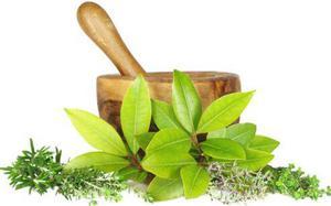 Ayurvedic Herbal Extract Manufacturer near Me -