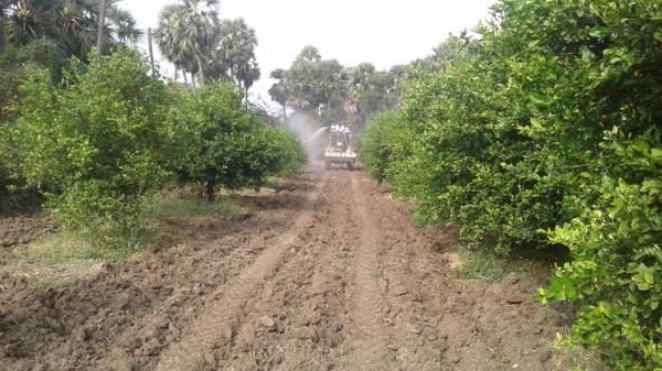 Beautiful Lemon Farm for Sale in Vinjamur, Nellore DT