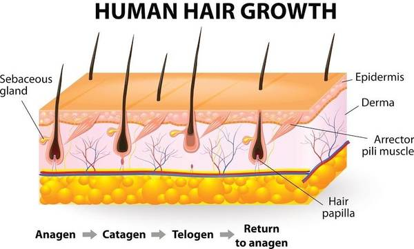 Why Avenues's clinic is the best place for hair transplant