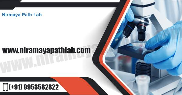Pathology Lab in Noida sector 104