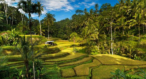Book DMC of BAli From India with affordable price- Galaxy