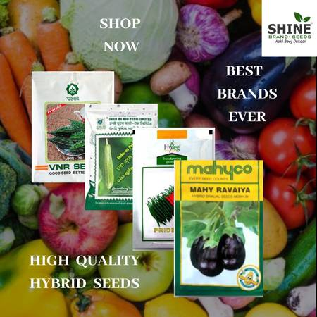 Have You Heard? ALL HYBRID SEEDS Is Your Best Bet To Grow