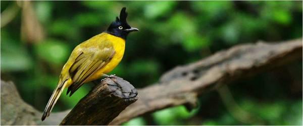 Bird Watching Tour of India