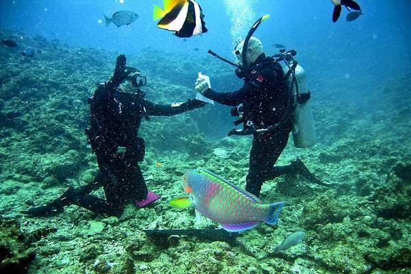 Get A Safe And Secure Experience Of Scuba Diving In Goa With