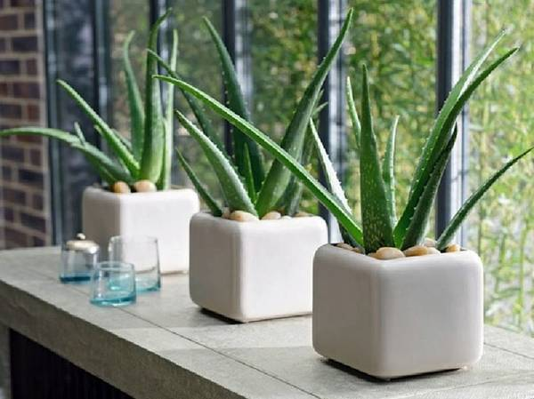 Contact Green Decor for Best Indoor Plants for Your Home