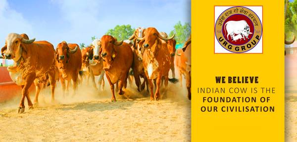 Go seva trust, Grab your opportunity to be a Gau Sevak.