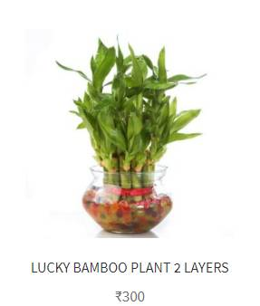 Buy flowers online in Noida