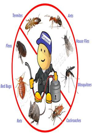 PEST CONTROL SERVICES IN CHANDIGARH   PANCHKULA  MOHALI