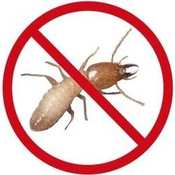 Pest Control Services- Anti Termite treatment in Chandigarh
