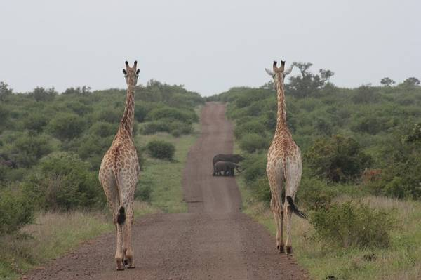 Bock Your South Africa Tour Package With Africincoming