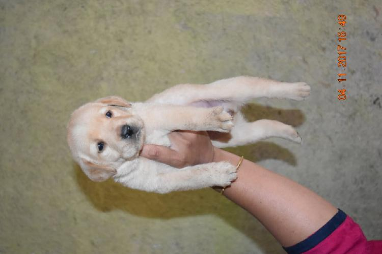We have import and champion pedigree pets available