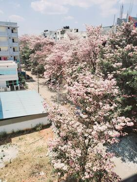 2 BHK Rental Home in Electronic City Phase 1